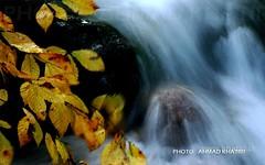 autumn (ahmad khatiri) Tags: jungel gorgan iran autumn