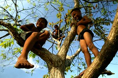 3 monkeys in a tree (phitar) Tags: sky 3 tree trois kids wow three topf50 cambodge cambodia 2006 monkeys phnompenh trio triplet topf200 treeoflife phitar earthasia