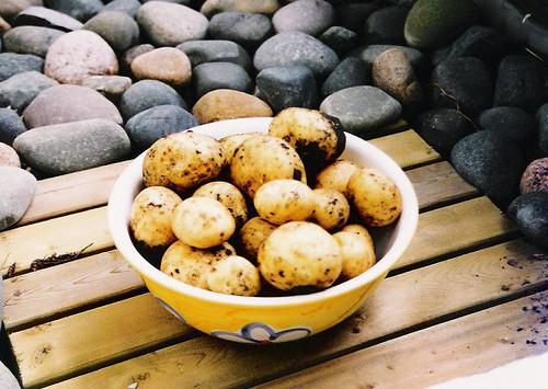 Potatoes (1998)