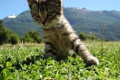 me pareció ver un lindo gatito! - by sicoactiva