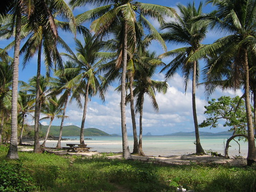 coconut trees, sand and sea