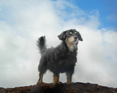 Spencer Bernal (patrix) Tags: sanfrancisco cloud dog clouds top20dogpix bernalhill dogwalk top20halloffame