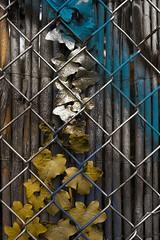 Graffiti Leaves 2 - by n0ll