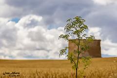 Palomar escondido (jose alb) Tags: nikon valladolid nubes palomar cereales d610 josealberto camposdecastilla