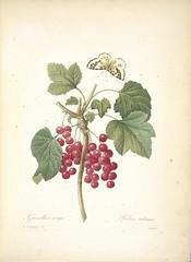 Anglų lietuvių žodynas. Žodis grossulariaceae reiškia <li>grossulariaceae</li> lietuviškai.