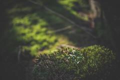 Trofaiacher Becken (alexanderkoch) Tags: outdoor wiese landschaft wald baum steiermark trofaiach