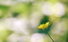Witness of the Noon (akigabo) Tags: montreal nature summer flora plant flower composition life dof depthoffield green yellow canon eos rebel dsrl t5i aquigabo 700d 250mm light bokeh colors noon witness wow