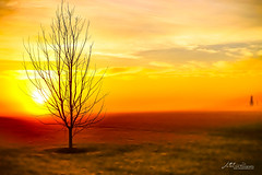 Sun through the Fog (Jae at Wits End) Tags: sunrise tree nature silhouette yellow sky fog color weather orange red am backlight backlit blue damp dawn daybreak daylight drizzle early firstlight foggy form gray grey haze haziness light mist morn morning outline plant rain shape sunup