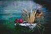 Ellanore011617-12 (MegzyTred) Tags: megzytred beta betafish viking funeral vikingfuneral fishfuneral deadfish goodparenting doingmybest kidsareweird lifeisstrange majesticfishfuneral majestic fish flames fire tinfoil foil boat water cremation burial burialatsea