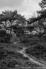 DSCF0187 (Klaas / KJGuch.com) Tags: drenthe netherlands nature natuur decemberwalks walkingindecember naturereserve naturereservation heath blackwhite fujifilm fujifilmxpro2 xpro2 wandeling wandelen hiking outandabout trees