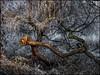 The Dragon (ookami_dou) Tags: willow weide salix tree frost hoarfrost winter ottersberg wümmewiesen