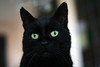 My hero! (katjacarmel) Tags: animals kat gato poes pets black portrait closeup eyes green expression cute