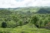 PhotAsia South India Munnar (Photasia) Tags: asia india munnar photasia southindia countryside landscape tea teaplantation