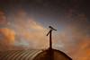 Vogel auf der Stange.jpg (Knipser31405) Tags: frühjahr schwansen 2016 ostsee nsgschwansenersee vogel