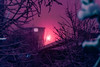 Untitled (elsableda) Tags: night neon futuristic dytopia cyberpunk elsa bleda istanbul shadow branch tree midnight colors winter snow