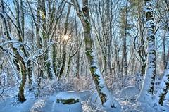 Snowy woods starburst - Day 12 / 365 (Wayne~Chadwick) Tags: