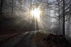 Eclat de lumière (Excalibur67) Tags: nikon d750 sigma globalvision 24105f4dgoshsma paysage landscape brume brouillard rayons soleil arbres trees forest foréts vosgesdunord lumière