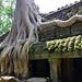 Ta Prohm Temple (Explored) DSC_6344 c