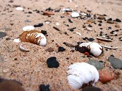 Nijmegen (mdarowska) Tags: city shells holland beach netherlands dutch nijmegen europe thenetherlands shell nl lent visitholland