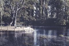 Fonti del Clitunno (EnzoCastaldi) Tags: italy water sony sigma acqua umbria 30mm a6000
