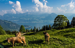 Lake Luzern from Mount Rigi (cedricbraganza) Tags: mountain lake canon lens landscape switzerland cow hill luzern mount kit 1855 lucerne efs swissalps rigi 500d mountrigi