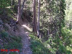Una strada per tornare (Bardo Solitario) Tags: strada natura alpi francia montagna bosco foresta battuta percorso sottobosco camminata hautealpes