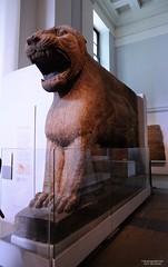 2015-05-20_GuardianLion-118895 (athenacgy) Tags: london britishmuseum len ishtar assyrian ashurnasirpal nimrud