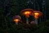 Light My Fire (Moonshroom*) Tags: moonshroom mushroom mushrooms leuchtpliz leuchtpilze led canon 5dm2 art pilz pilze fliegenpilz fungi fungus nature light magic mystik fantasy amanita forest wald makro lumen licht lickrswarmlighting