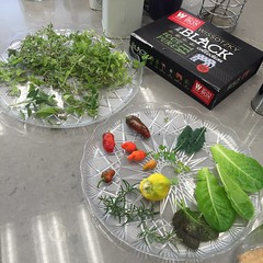 Daily Harvest (Assaf Shtilman) Tags: daily harvest peppers chili chilli lettuce kale herbs mint sage rosemary