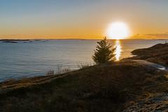 Sunset Landscape (torlind54) Tags: haugesund 2016 tormod lindøe norway kvalsvik rogaland sea sunset sky blue tree islets trail rocks