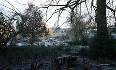20-IMG_7624 (hemingwayfoto) Tags: architektur barock botanischergarten fürstbischöflich farn münsterwestf matteucciastruthiopteris raureif schlossgebäude strausfarn uni universität westfälischewilhelmsuniversität westfalen