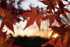 PC105666.jpg (plasticskin2001) Tags: leaf