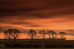 Winter Light (Glenn D Reay) Tags: morning trees lowlight silhouette sunrise row landscape longexposure dawn colourful pentaxart pentax k30 sigma1770hsm glennreay