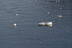 _DSC1768_DxO (Alexandre Dolique) Tags: d810 base de loisirs étampes gelée