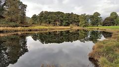 Becalmed - River Brathay (Paul Thackray) Tags: lakedistrictnationalpark englishlakedistrict greatlangdale langdale riverbrathay reflections 2016