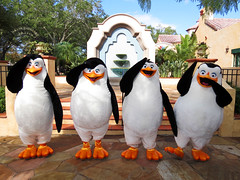The Penguins of Madagasar (meeko_) Tags: penguin madagascar thepenguinsofmadagascar rico private skipper kowalski dreamworks characters universalorlandocharacters dreamworkscharacters hollywood universal studios florida universalstudios universalstudiosflorida themepark orlando universalorlando