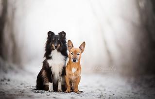 Zelda and Toby