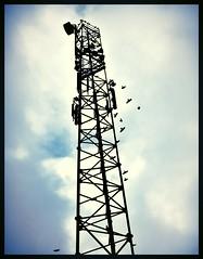L'antenne aux oiseaux