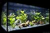 Acuario 200L (lautada) Tags: acuario dulce agua water peces acuariofilia