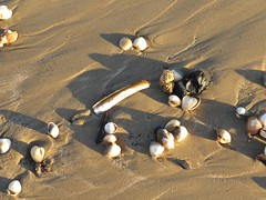 7079 Assorted shells left by the tides (Andy - Busyyyyyyyyy) Tags: 20170114 bbb beach greatstone kent sand seashell shells sss
