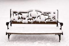 This photo has no title (WilliamND4) Tags: benchmonday hbm snow bench nikond810