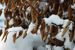 Winter (melleus) Tags: winter snow park cold freeze seasons nature many brown white dry outdoor nikon d200 tokina dcraw