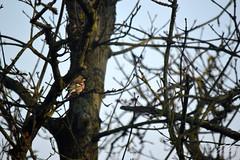 Hidden Bird (Enrico.ico) Tags: fringuello bird tree nature wild birdwatching gard garden life nikon nikond3200 d3200 enrico enricoico montanari