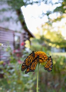I am ready for Butterfly Season again