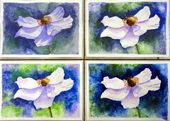 White flower, anemone, all together, by Yasmin - DSC09742 (Dona Mincia) Tags: flower art watercolor painting paper arte flor inspired study tribute homage pintura aquarela inspirado whiteanemone rereading relecture annmortimer anmonabranca homenagemreleitura