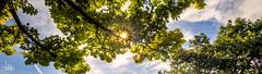 Sunbeam Pano (Ukelens) Tags: trees light sky cloud sun tree clouds canon lights licht exposure cloudy himmel wolke wolken bern sonne bume sunbeam baum belichtung sonnenstrahl hdr cloudporn lighteffects lichter lightroom lighteffect sonnenschein wolkig paulklee luftstation lichteffekte lichteffekt airstation hdrphotography berncity ukelens