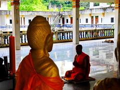 ,, The Dog Palace ,, (Jon in Thailand) Tags: orange reflection nikon buddha monk mama jungle nikkor chanting d300 decayingbuilding 175528 thelittledoglaughed littledoglaughedstories thedogpalace
