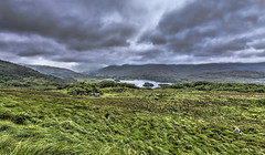 Ring of Kerry_12 (William_Doyle) Tags: blue ireland dublin green galway nature water animals clouds photoshop cows cliffsofmoher gaelic blarneycastle ringofkerry guinnessstorehouse roscommoncastle bigbuns topazadjust july2015