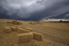 Pacas en la tormenta (anpegom) Tags: verano tormenta paja pacas castilla rastrojo