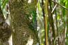 DSC_8327_LR (CharlieBro) Tags: 2016 arenal centroamerica costarica volcán volcánarenal agosto americacentrale animal animale august basiliscopiumato estate forest foresta green lucertola natura nature plumedbasilisk reptile rettile summer verde volcano vulcano wild